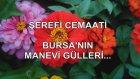 Şerefi Cemaati Bursa'nın Manevi Gülleri...