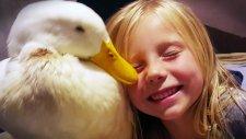 Ördeğine Çocuğu Gibi Bakan 5 Yaşındaki Kız