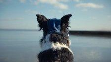 Volkswagen'den Köpeklere The Connected Dog Projesi