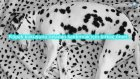 Kötü Kokmaya 10 Köpek Irkı : Dünyanın Enleri ?