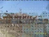 Çöplüçiftliği Köyü 2 =yeni=