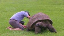 Hayatında İlk Kez Banyo Yapan 184 Yaşındaki Kaplumbağa Jonathan