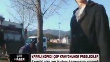 Canlı Köpeği Çöp Arabası Presine Atan Çorum Belediyesi