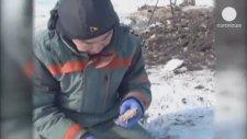 Mamut Kalıntısında Sıvı Halde Kan Bulunması