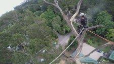 40 Metre Yükseklikte Ağaç Kesmek!