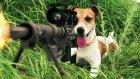 Bambaşka Bir Boyuta Geçen Sevimli Hayvan Videoları