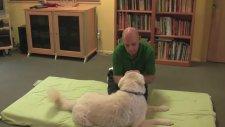 Nickie Scott'dan Köpeklere Masaj Teknikleri