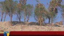 Çevrecilerden Korkan İnşaat Firması Kuruttuğu Ağaçları Yeşile Boyadı