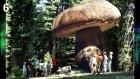 TOP 10 Giant Mushroom : Dünyanın Enleri ?