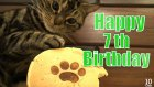 Musashi the Cat Happy 7th Birthday