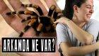 Arkamda Ne Var? | Gökçe #Her Hafta Yeni Youtuber