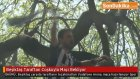 Beşiktaş Taraftarı Coşkuyla Maçı Bekliyor