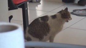 Doğum Sancısı Çeken Kedi Sağlık Ocağına Gitti