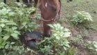 Meraklı At