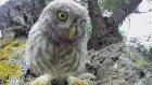 Meraklı Baykuş Kamerayı İnceliyor