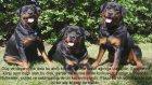 Dünyanın En Pahalı 10 Köpeği