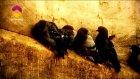 Esma-Ül Hüsna Özel 26. Bölüm - El Habir