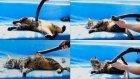 Kendine Elektrikli Süpürge İle Masaj Yaptıran Kedi