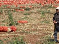 Satamadığı Soğanlar İçin Bekçi Tutan Çiftçi - Adana