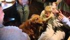 Köpeğe Verilen Yiyeceği Aşıran Sevimli Ufaklık