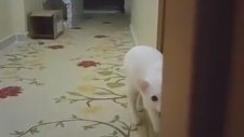 Sahibini Öldürmeyi Planlayan Kedi