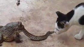 Kurbağanın Ağzındaki Yılan Kediye Karşı