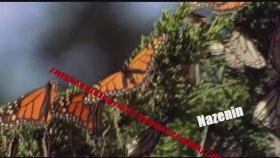 Zeliha Sunal- Minik Kelebek Vd Nazenin