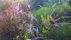 Aquaplant1