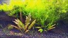 Aquaplant3