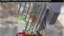 Şili'de Bir Genç İntihar İçin Aslanların Kafesine Girdi