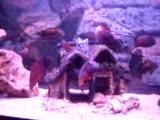 akzo nobel rüstem tropheus red chimba