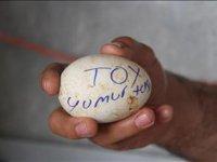 Toy Kuşu Yumurtası - Çankırı