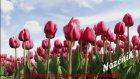Yeliz Hoşgeldin bahar Vd NAZENİN