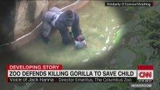 Öldürülen Gorilin Olay Esnasındaki Yakın Çekim Görüntüleri