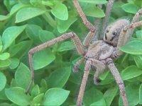 Örümceklere Dokunmak - Böcek Reyiz