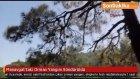 Antalya'nın Manavgat İlçesinde,  Orman Yangını Söndürüldü