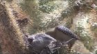 Zombi Ağaçkakanın Güvercin Beyni Ziyafeti (Şerefsiz Kuşlar Serisi - 1)