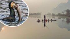 Çinlilerin Hayret Veren Balık Tutma Tekniği