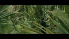 Kardaki Palmiyeler-Filbox