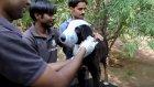 Yüzü Kurtlarla Kaplı Köpeğin Kurtarılma Videosu