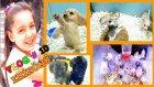 Günlük Vlog # 10 Eminönü Pet Shop Ları Gezdik Hayvanları İzledik Sevdik Ve Kömüre Hediye Aldık :)
