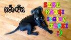Günlük Vlog # 12 Köpeğimiz Kömürün Yüksek Seste Verdiği Tepkisi Kısa Bir Vlog Olsun Dedik :)