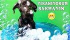 Günlük Vlog # 20 Bebek Havuzun Da Köpeğimiz Kömürü Yıkıyoruz :)