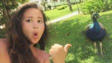 Selfie Çekmek İsteyince Olanlar Oldu