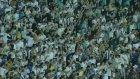 Santos 3-0 Chapecoense - Maç Özeti İzle (3 Temmuz Pazar 2016)