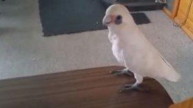 Brokoli Sevmeyen Papağan