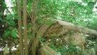 Kelebekler Kanyonu M22 2015 07 18