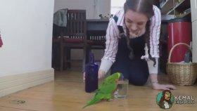 Bardağa Su Dökülünce Mutlu Olan Papağan