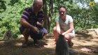 Lombok Maymun Ormanı Endonezya
