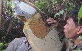 Kamboçya Anzer Balı